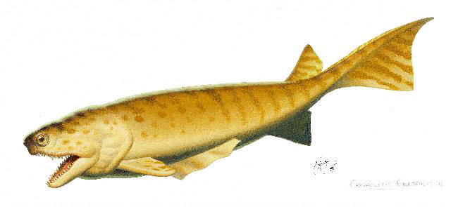 Reconstruction of Cheirolepis canadensis