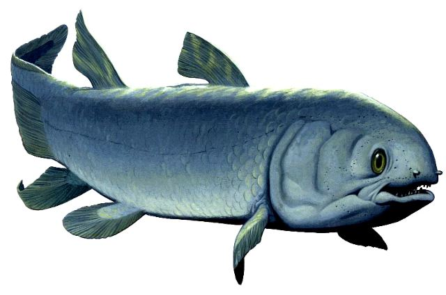 Reconstruction of Miguashaia bureaui